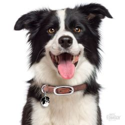 Médaille Friends Border Collie