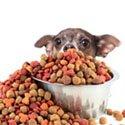 Alimentation pour chien